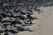Sandbags to protect the coast of Sheapsheadbay gulf in New York — Stock Photo