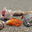 Seashell on the sand and ocean — Stock Photo
