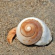 Seashell on the sand and ocean - Stock Photo