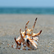 Seashell on the sand and ocean — Stockfoto