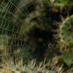 Spider cobweb in the moorning at california kaktuses — Stock Photo #23174486