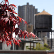 Artistic view to rooftops, water tank supply and red leafs - Stockfoto