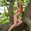 Blond fashion model posing artistic on the tropical tree - Stockfoto