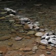 Mountain river with blue clean water and stones — Stock Photo #30652127