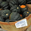 Stock Photo: Fresh picked arom squash in bucket