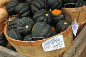 Fresh picked arom squash in a bucket — Stock Photo