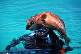 Diver caught black grouper fish — Stock Photo