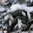 Fresh snow on pine tree — Stock Photo