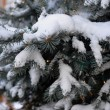 Fresh snow on pine tree — Stock Photo #38177975