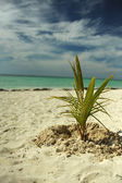 Coconut palm trees at beach — Stok fotoğraf