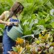 Young female gardener watering the plants — Stock Photo