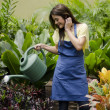 Stock Photo: Young female gardener watering plants