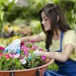 Young beautiful girl working at a nursery garden — Stock Photo