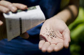 One hand strewing seeds from packet into another hand — Stock Photo