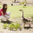 Girl feeding ducks and geese — Stock Photo