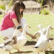 Girl feeding ducks and geese - Stock Photo