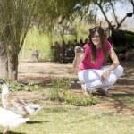 Goose photographer — Stock Photo