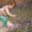 Little girl picking blue flowers - Stock Photo