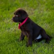 Dog on grass — Stock Photo #40135519