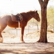 Brown horse standing still next to a tree — Foto Stock #41009359
