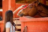 Menina escovando o cabelo de um cavalo no estábulo — Fotografia Stock