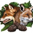 Two foxes on white background - Stock Photo