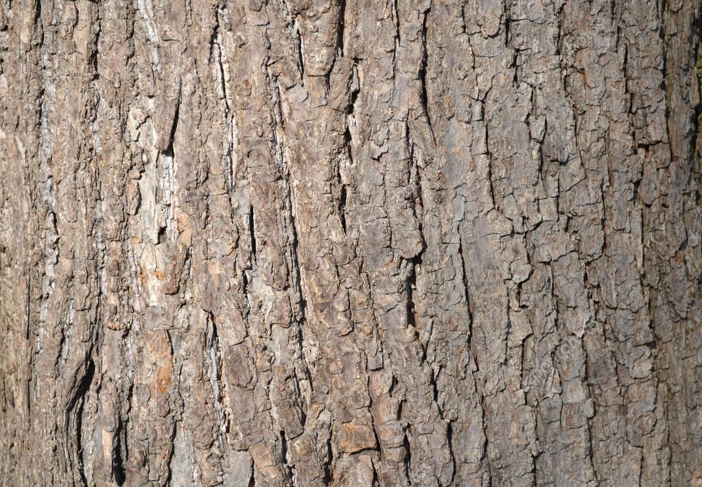 片状树树皮-垂直