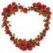 Heart of red roses — Stock Photo