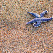 Summer composition - starfish with sand as background, selective — Stock Photo