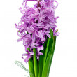Stock Photo: Colorful bouquet from hyacinth arrangement centerpiece isolated