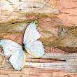 Foto Stock: Abstract composition from butterflies, birch bark and straw