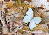 Abstract composition of butterflies, birch bark and straw — Stock Photo
