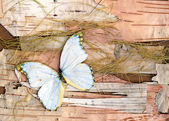 Abstract composition from butterflies, birch bark and straw — Stock Photo