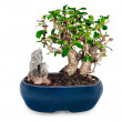 Stock Photo: Miniature bonsai tree and stone in blue pot isolated on white ba