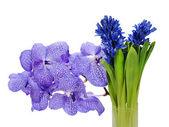 Bouquet colorato da giacinto e orchidea centerpi disposizione — Foto Stock