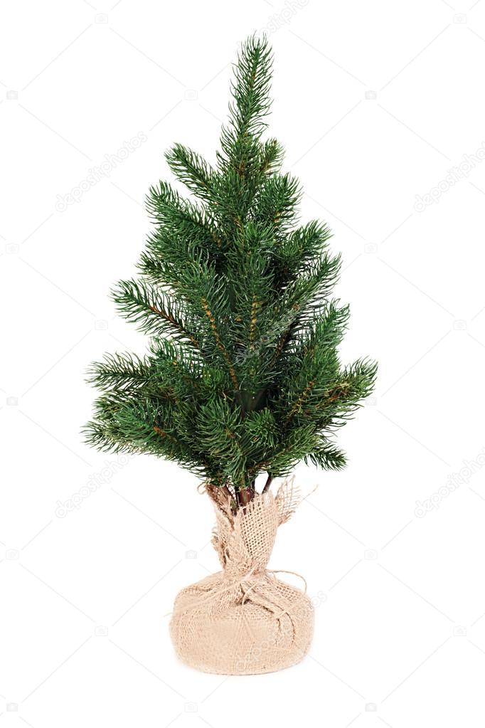 圣诞孤立在白色背景上的杉木树