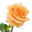 Stock Photo: Yellow rose isolated on white background