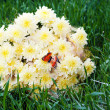 Bouquet from yellow asters with butterfly on green grass — Stock Photo #20829029