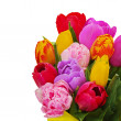 Stock Photo: Fragment of floral bouquet from colorful tulips isolated on whit