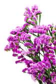 Bouquet from purple statice flowers arrangement centerpiece isol — Stock Photo