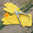 Yellow rubber gloves, lily and garden pruner on wooden backgroun — Stock Photo #26516137