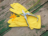 Yellow rubber gloves, lily and garden pruner on wooden backgroun — Stock Photo