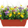 Composition of artificial garden flowers in brown flowerpot isol — Stock Photo