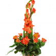 Foto Stock: Floral bouquet of orchids and gladioluses arrangement centerpiece in vase isolated on white background.