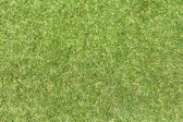 Field green grass background. — Stock Photo