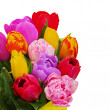 Fragment of floral bouquet from colorful tulips isolated on whit — Stock Photo