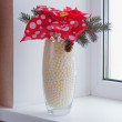 Composition from Poinsettia Plant with spruce branches in vase o — Stock Photo