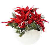 Poinsettia plant with spruce branches in vase isolated on white — Stock Photo