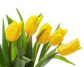 Flower bouquet from yellow tulips isolated on white background. — Stock Photo