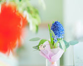 Bouquet from hyacinth flower. — Stock Photo